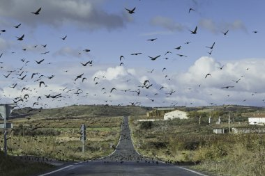 """Картина, постер, плакат, фотообои """"мигрирующие птицы """", артикул 38083459"""
