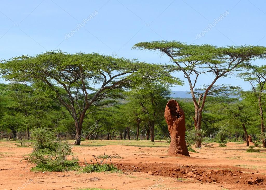Ethiopian Termite Mounds In The Forest Landscape Nature