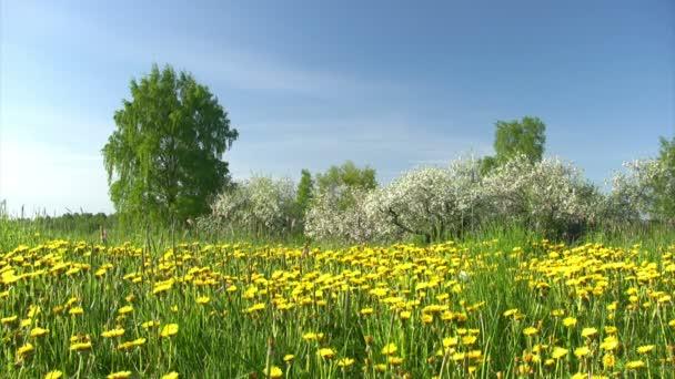 apfel-blumengarten