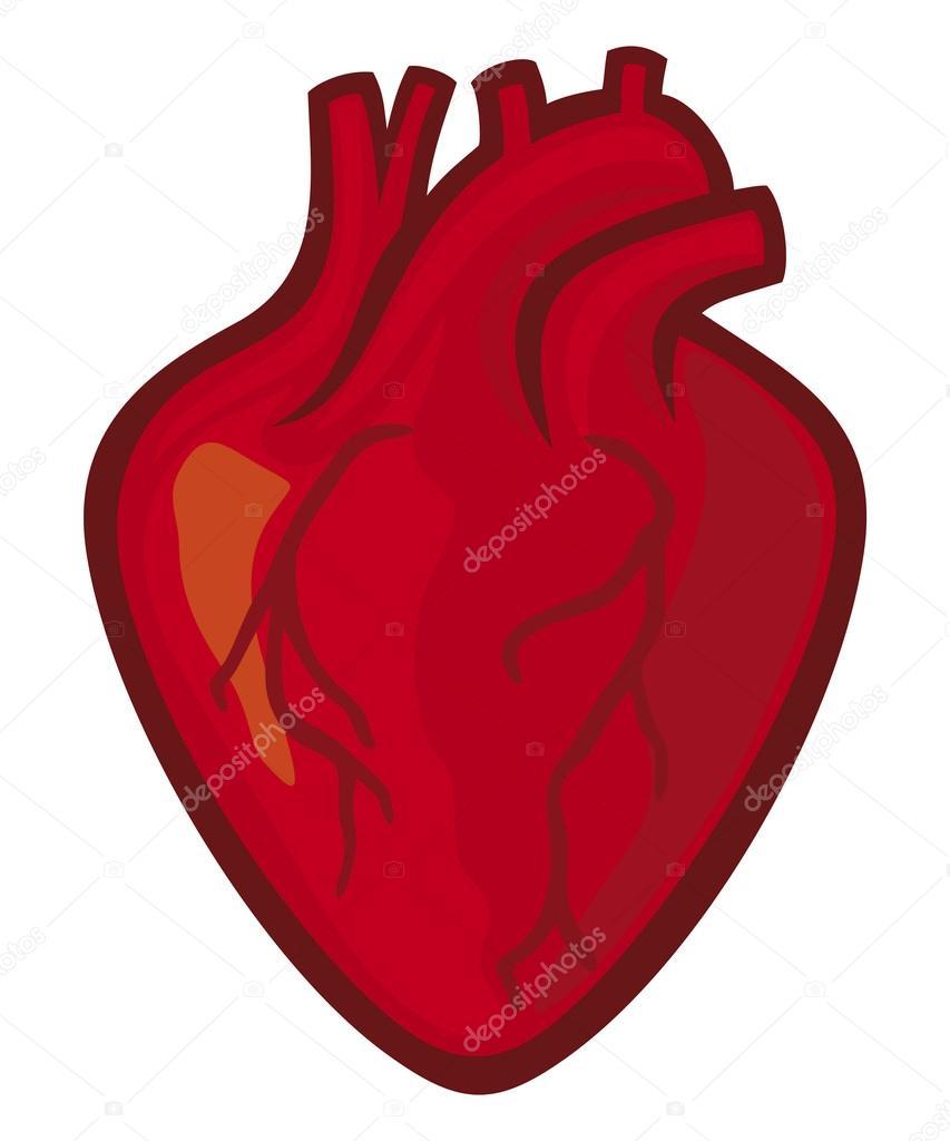 Corazón Humano Archivo Imágenes Vectoriales Tribaliumivanka