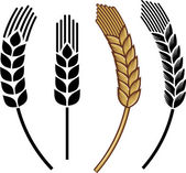 Photo Wheat ear icon set