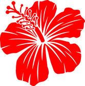 krásné červené ibišek květ