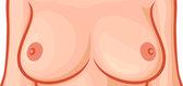 Brustdarstellung