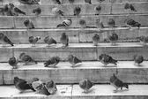 pigeons on stairs
