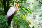 Fotografie close up of a stork on natural background