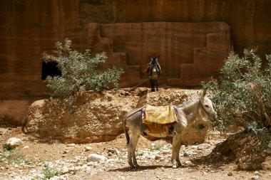 donkeys in desert