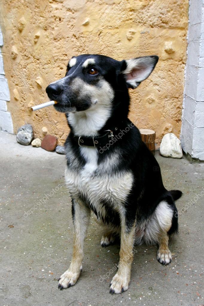 Resultado de imagem para cachorro fumando