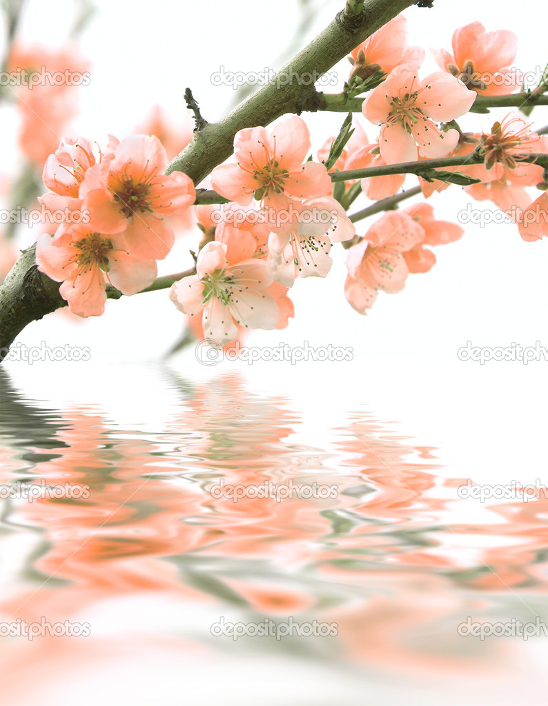 Flowers and reflection over white