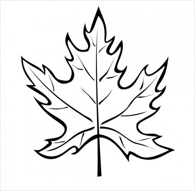 The silhouette of the maple leaf isolated on white