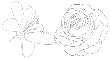 set of shape roses and lilies isolated on white