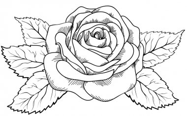 beautiful rose in the style of black and white engraving.