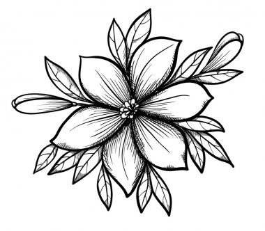 Beautiful graphic drawing Lily branch with leaves and buds of the flowers.