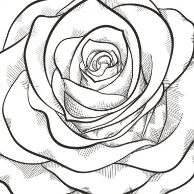 Background with beautiful black and white rose