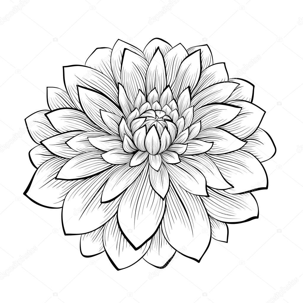 Черно белый цветок