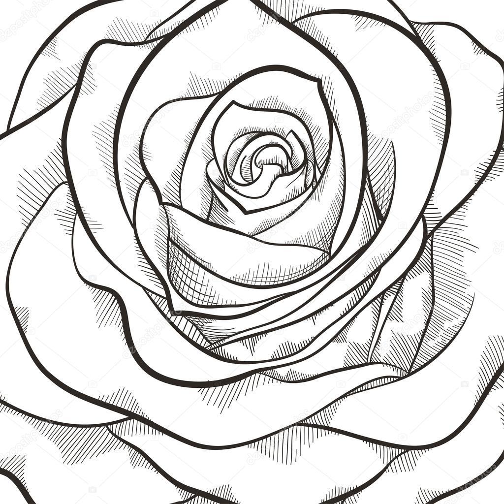 Bellissimo Bianco E Nero Su Sfondo Rosa Vettoriali Stock