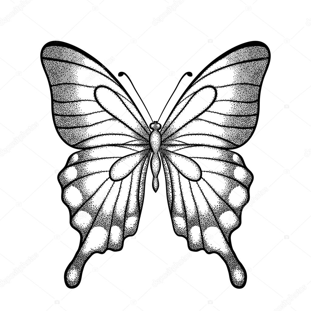 graphic black and white butterfly. Hand-drawn contour lines and strokes. one isolated on white