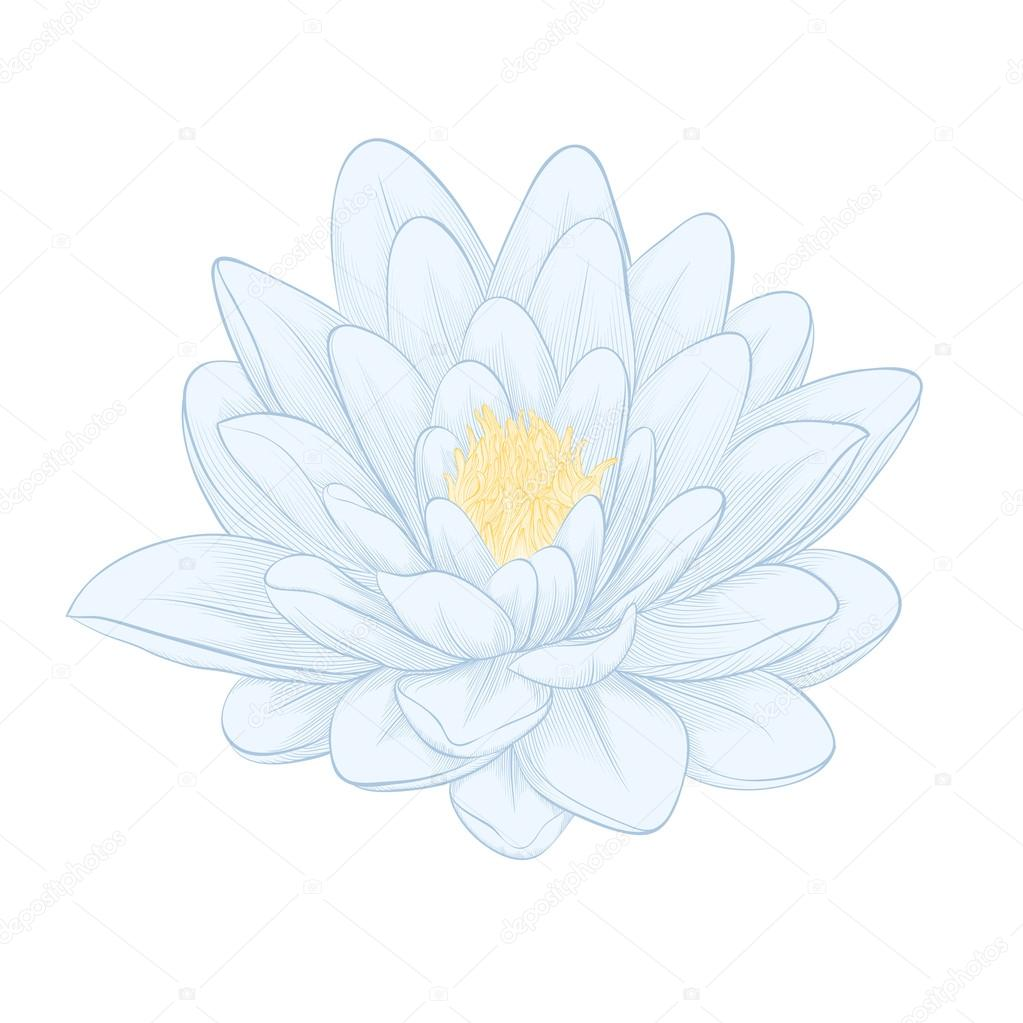 Lotus Flower Painted In Graphic Style Isolated On White Stock
