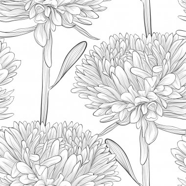 black and white seamless background with flowers aster