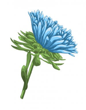 beautiful bright blue aster with watercolor effect isolated on white background