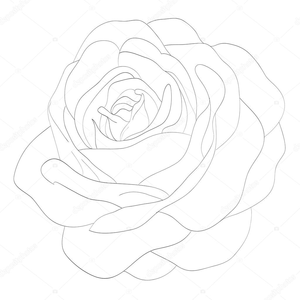 Áˆ Rose Drawing Stock Pictures Royalty Free Simple Rose Drawing Images Download On Depositphotos