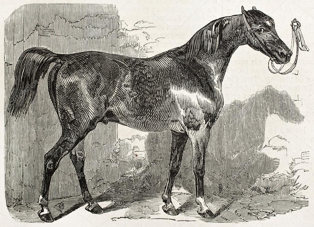 horses by norman mcaig poem analysis Poetry lovers' page: featuring complete collections of poems by the following poets: rudyard my son, said the norman baron, i am dying, and you will be heir to all the broad acres in england that but before you go over to rule it i want you to understand this:-- the saxon is not like us normans.