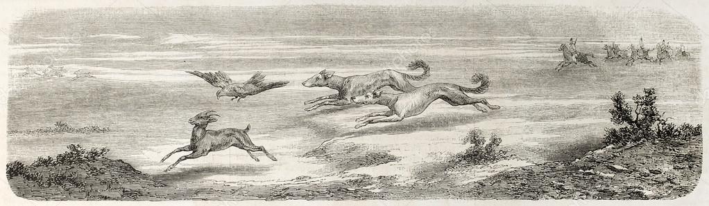 Gazelle hunting