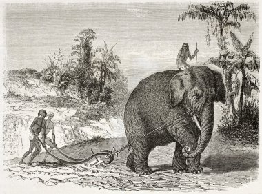 Elephant ploughing old illustration, Ceylon (nowadays Sri Lanka). Created by Therond and Huyot after Andrasy, published on Le Tour du Monde, Paris, 1860 stock vector