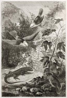 Galapagos fauna