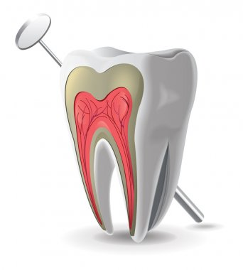 Structure Of Tooth