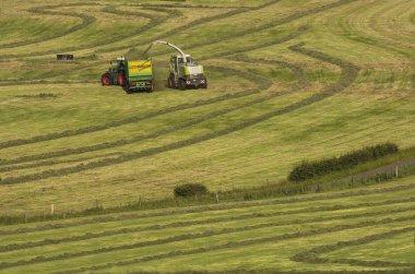 Haymaking, forage harvester