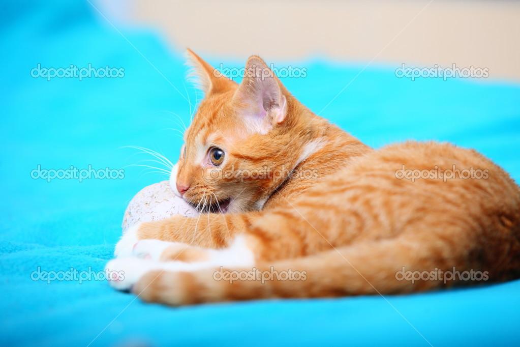 8dd52476a199 Ζώα στο σπίτι. κόκκινο χαριτωμένο μικρό μωρό γάτα κατοικίδιων ζώων γατάκι  τοποθέτηση κρεβάτι το παιχνίδι με μπάλα τυρκουάζ κουβέρτα — Εικόνα από ...