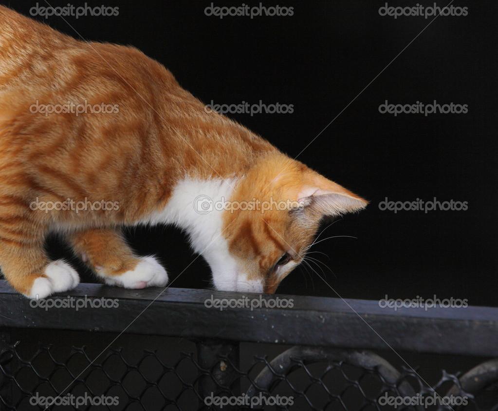0401e014c059 Ζώα στο σπίτι - κόκκινο χαριτωμένο γάτα μικρό κατοικίδιο ζώο γατούλα στο  μπαλκόνι– εικόνα αρχείου