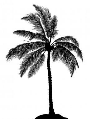 Palmtree black