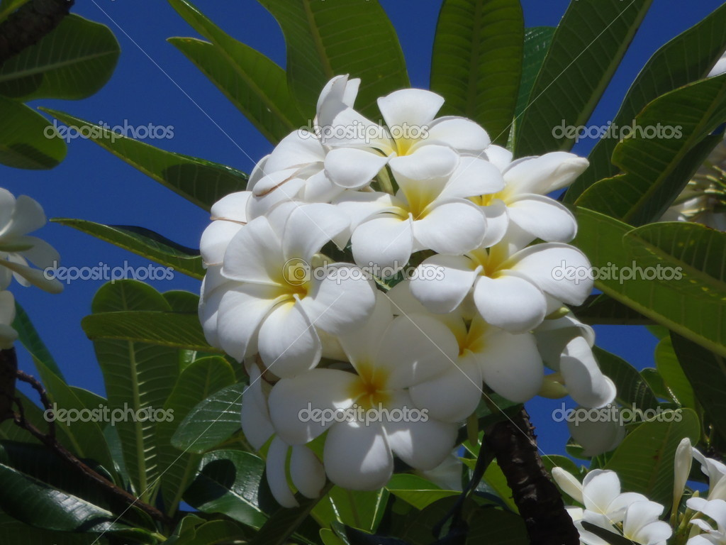 Flowers of tropical plants vietnam stock photo vodolaz 18099283 flowers of tropical plants vietnam stock photo mightylinksfo