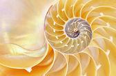 Nautilus-Schale