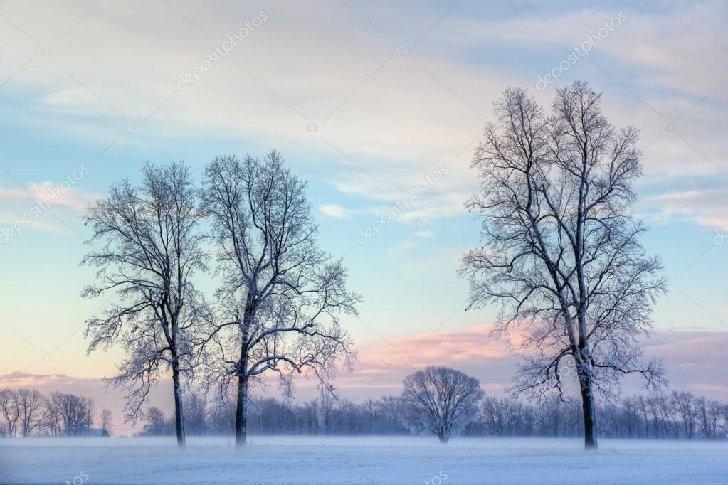Frosted Bare Trees at Dawn