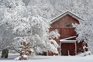 Winter Forest and Red Barn