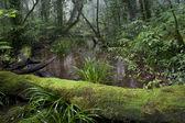 Fényképek Trópusi mountian erdő