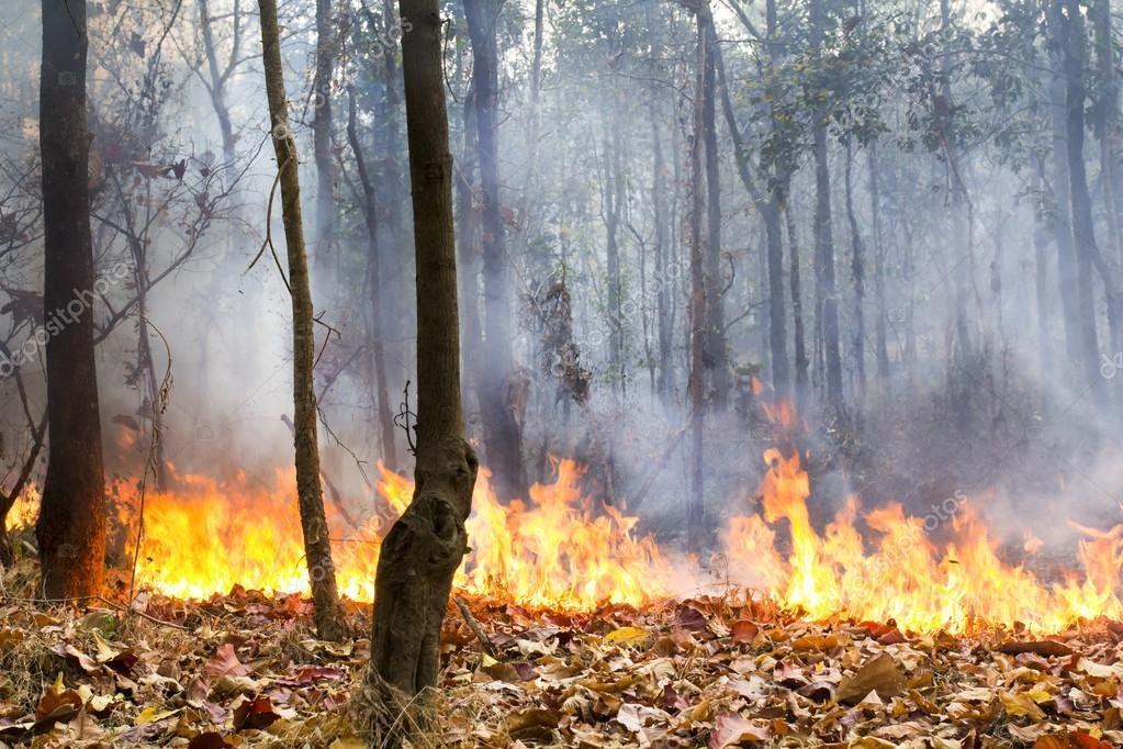 Risultati immagini per foreste tropicali distrutte