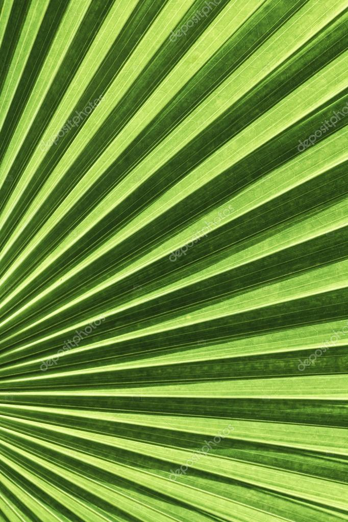 Vanuatu fan palm leaf with diagonal lines
