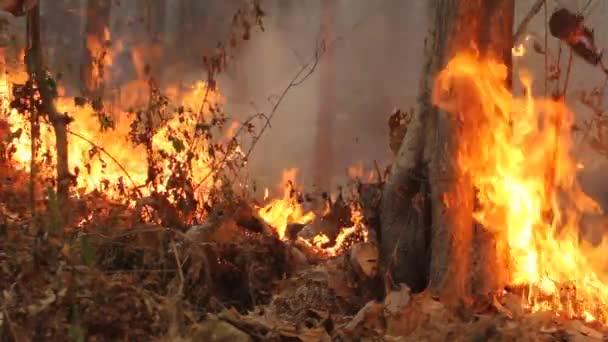 zlikvidováno spálením tropických lesů, Thajsko