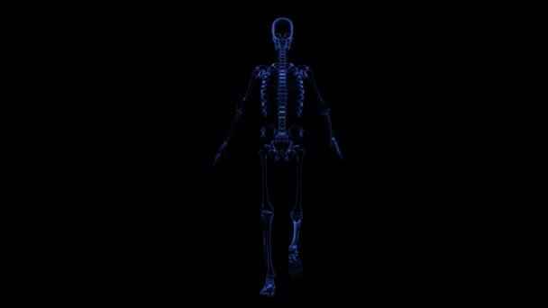 Anatomie: kostra