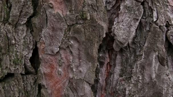 Stromová kůra