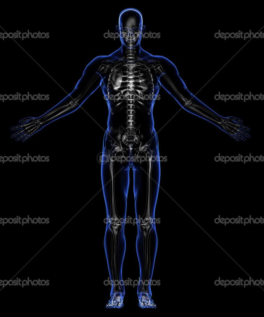 Anatomie: Haut und Skelett — Stockfoto © SCHMaster73 #38896615