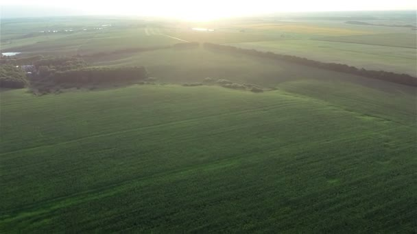 Flying over fields and forest on sunset