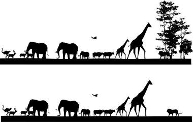Safari animal wildlife