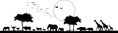 Beauty silhouette of safari animal wildlife