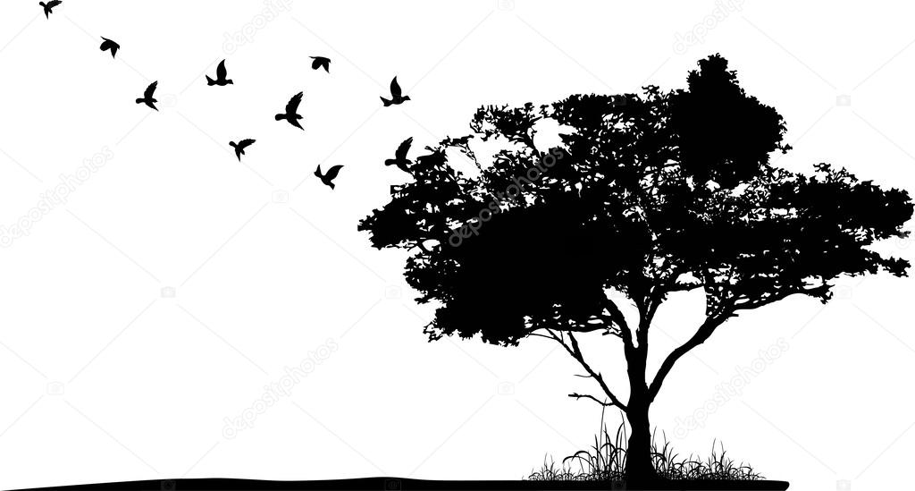 Treesilhouette with birds flying