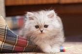 A kis bolyhos cica hazugság