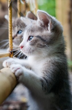 curious young kitten
